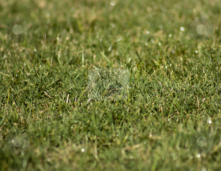 Green Grass stock photo, A background type shot of a green grass lawn by Patrick Noonan
