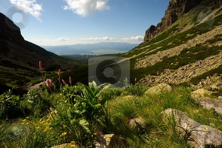 Mountain valley in summer day stock photo, Mountain valley in summer day with a pink flowers in foreground by Juraj Kovacik