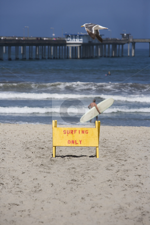 Surf Beach stock photo, Seagull flying above sign for surfing only by Scott Griessel