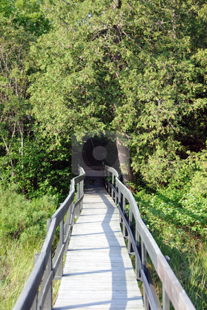 Wooden walkway stock photo, Picture of a wooden walkway in a Northtern forest by Alain Turgeon