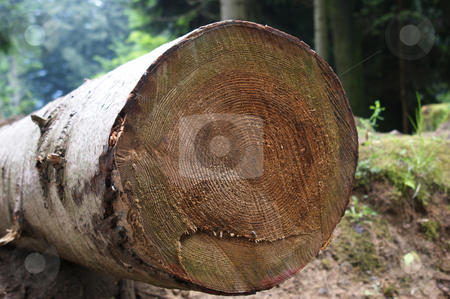 Annual rings from felled tree stock photo, Jahresringe eines gefllten Baumes / Annual rings from felled tree by Thomas K?
