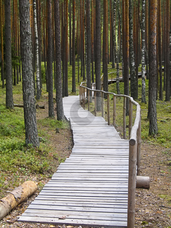 Walking path in the forest stock photo, A wooden walking path in the Estonian forest by Alessandro Rizzolli