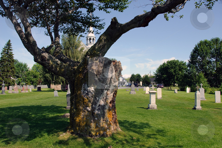Cemetery stock photo, A very old tree in the middle of a cemetery by Alain Turgeon