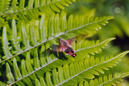 Moth on a fern stock photo, Closeup picture of a moth of a green fern by Alain Turgeon