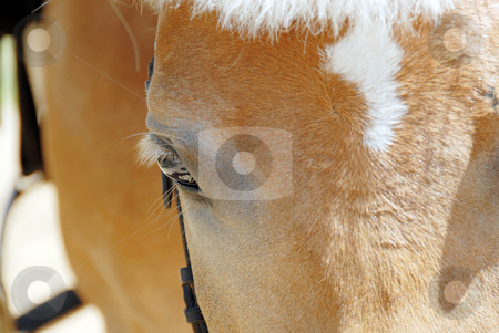 Horse eye closeup stock photo, Brown horse eye with eyelashes side view closeup by Julija Sapic