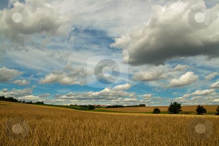 Corn Fields stock photo, A summer scene of corn fields and cloudy heaven by Alexander Zschach