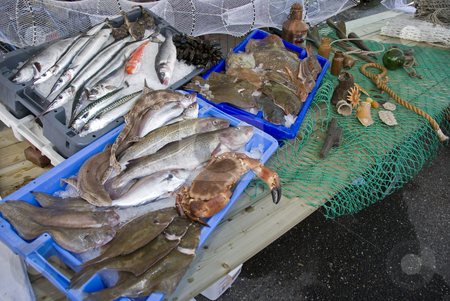 Fresh fish stock photo, Several  fresh fishes on the fish market in Holland by Chris Willemsen