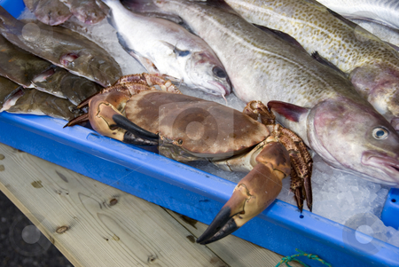Fresh fish stock photo, Living crab on the dutch fishmarket in stellendam by Chris Willemsen