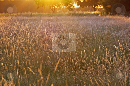 Summer glow grassland  stock photo, Summer glow grassland with bright light of the sunset by Karin Claus