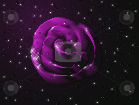Purple rose stock photo, Purple rose by Minka Ruskova-Stefanova