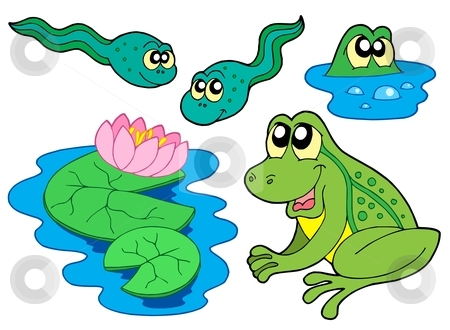 Frog collection stock vector clipart, Frog collection on white background - vector illustration. by Klara Viskova