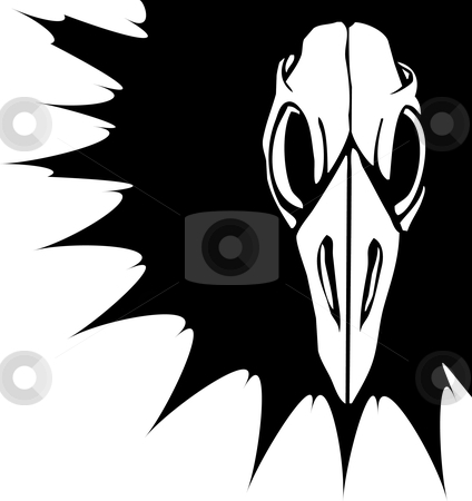 Bird Skull  stock vector clipart, Skull of a bird staring straight out. by Jeffrey Thompson