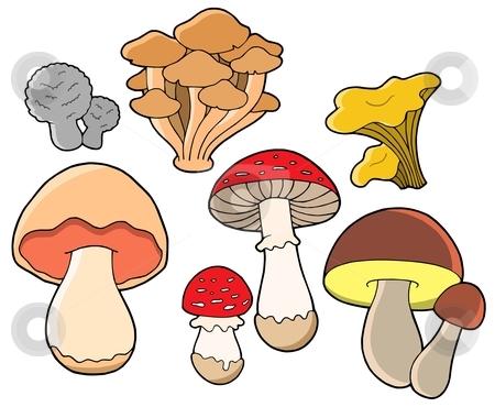 Various fungi collection stock vector clipart, Various fungi collection - vector illustration. by Klara Viskova