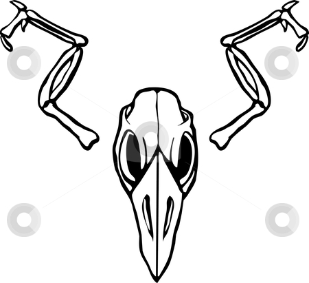 Bird Skull stock vector clipart, Bird Skull with wing bones outspread. by Jeffrey Thompson