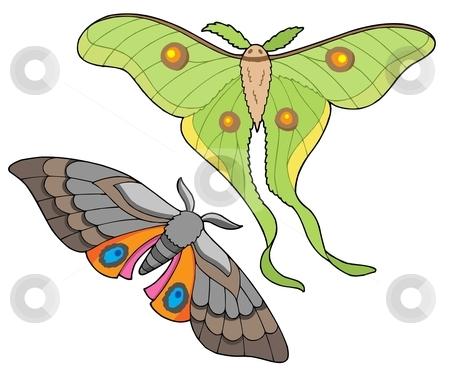 Night butterfly collection stock vector clipart, Night butterfly collection - vector illustration. by Klara Viskova