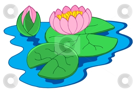 Pink water lilies stock vector clipart, Pink water lilies - vector illustration. by Klara Viskova