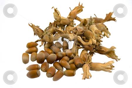 Hazelnuts stock photo, Hazelnuts isolated on white background by Minka Ruskova-Stefanova