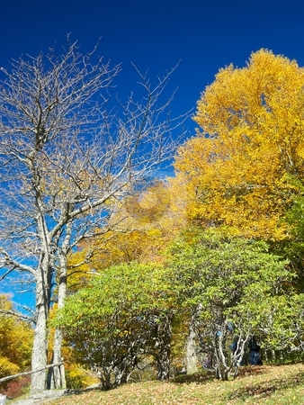 Autumn Shelter stock photo, Vacationers take shelter under vibrant autumn foliage and a cloudless blue sky at a picnic area off the Blue Ridge Parkway. by Rebecca Ledford