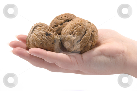 Hand witn walnuts stock photo, Hand witn walnuts by Minka Ruskova-Stefanova