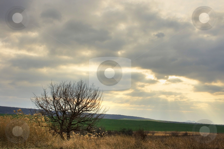 The spring is comming stock photo, Agricultural plane by Minka Ruskova-Stefanova