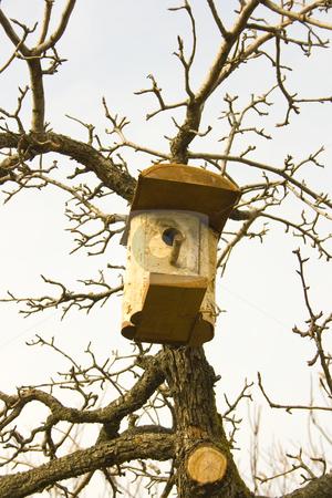 Birdhouse on tree stock photo, Birdhouse on tree by Minka Ruskova-Stefanova