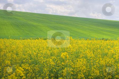 Agricultural plains stock photo, Agricultural plains with cloudy sky by Minka Ruskova-Stefanova
