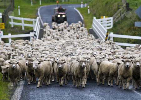 The forgotton world stock photo, Sheep mustering: The Forgotten World Highway, one of New Zealand's most secluded roads, explores the ever-changing landscape between Taumarunui and Stratford.  New Zealand's first heritage trail, this scenic route winds over four mountain saddles, alongside the spectacular Tangarakau Gorge and passes through the 180-metre-long, single lane, Moki tunnel. by Robin Ducker