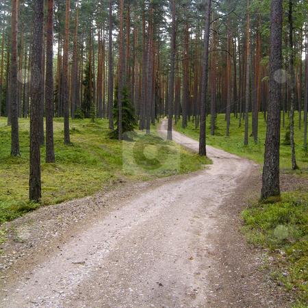 A road in the forest stock photo, A rough road in the Estonian forest by Alessandro Rizzolli