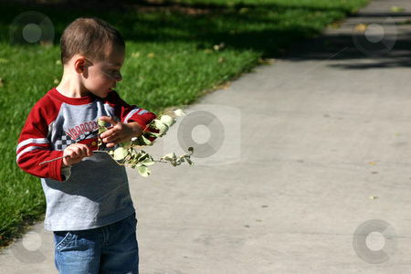 Tearing off the Leaves stock photo, Boy looking playing with the branch by Mehmet Dilsiz