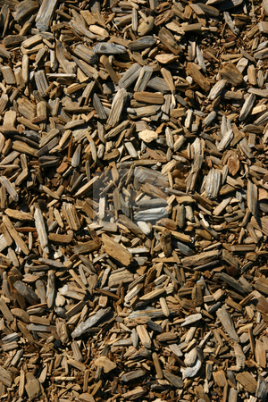 Barks stock photo, Close up on Barks for background by Mehmet Dilsiz