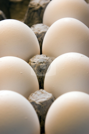 Close up on Eggs in a Carton stock photo, Close up on a Carton of Eggs by Mehmet Dilsiz