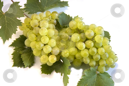 Grape stock photo, Grape on white background by Minka Ruskova-Stefanova