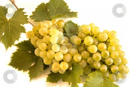Grape stock photo, Grape on white background by Minka Ruskova-Stefanova