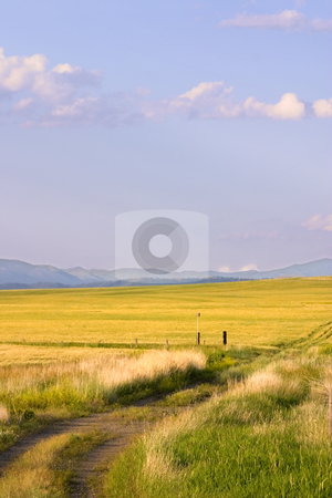 Path Leading to a Field in Montana stock photo, Field in Helena Montana - Path leading to a Field with Blue Skies on the Background by Mehmet Dilsiz