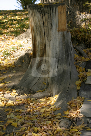 Trunk stock photo, Cut Trunk by Mehmet Dilsiz