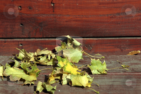 Close up on the Leaves Falling stock photo, Close Up - Leaves on the Stairs by Mehmet Dilsiz