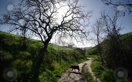 Dog on a Trail 1 stock photo, Dog on a trail in Southern California. by Kristine Keller