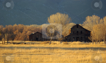 Barns and Wild Deer stock photo, Several deer stop to eat some grass near crumbling barns in Kern County, California. by Kristine Keller