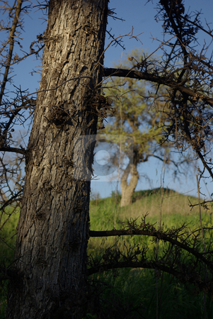 Trees stock photo,  by Kristine Keller
