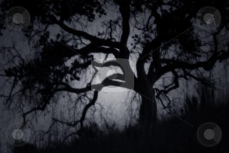 Creepy Oak 1 stock photo, A spooky, night-time view of an oak tree. by Kristine Keller