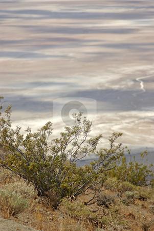 Desert Plant Life stock photo, Desert plant life above the salt flats of the Mojave Desert, California. by Kristine Keller