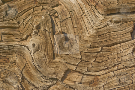 Curvy Tree Rings stock photo,  by Kristine Keller