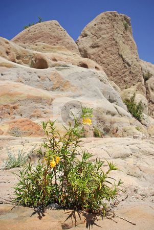 Yellow Wildflowers Growing Out of Rocks stock photo,  by Kristine Keller