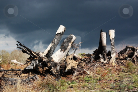 Fire - A Stark Warning stock photo, Burnt tree stumps are highlighted against black thunder clouds - a stark reminder of the hazards of a routine crop clearing fire that raged out of control by Gozzoli
