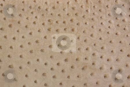 Ostrich Leather Background stock photo, A full quill section of ostrich leather as a background. by Gozzoli