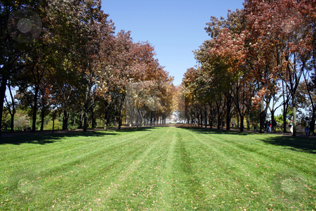 Trees in a Park stock photo, Trees in downtown St. Louis Park by Mehmet Dilsiz