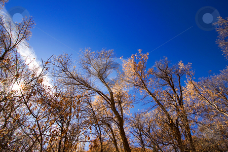 Trees Under the Blue Skies stock photo, Blue Skies with Sun Reflecting on the Trees by Mehmet Dilsiz