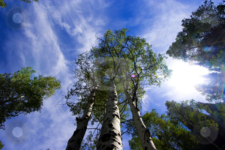 Looking up in the Skies with Trees stock photo, Sky with Trees surrounding by Mehmet Dilsiz