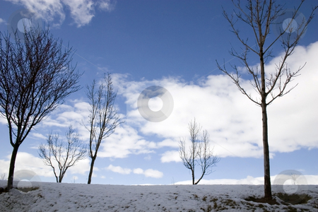 Winter Scene with Trees stock photo, Close up on a Trees in a Winter Scenery by Mehmet Dilsiz