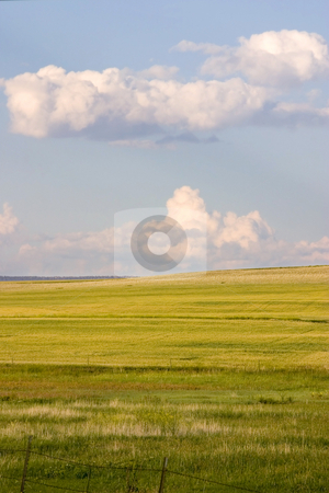 Field in the Country stock photo, Farming Field in Helena Montana by Mehmet Dilsiz